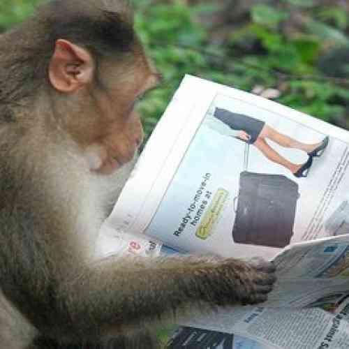Arrestan mono en Pakistan