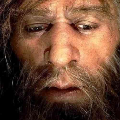 Los neandertales ya tomaban manzanilla con fines medicinales