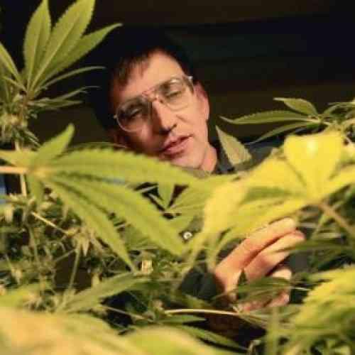 Advierten sobre efectos nocivos de la marihuana, pero sugieren no penalizar su consumo