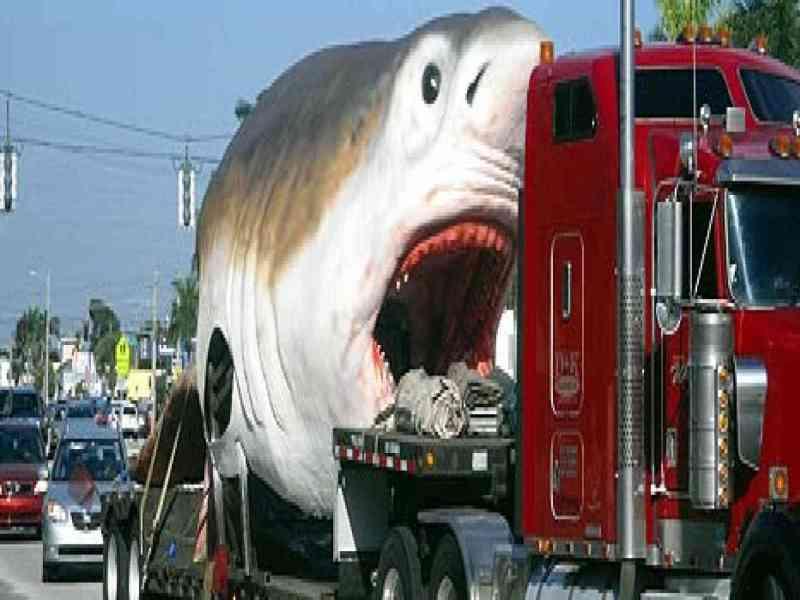 Un gigantesco tiburón prehistórico sorprende a conductores de Florida