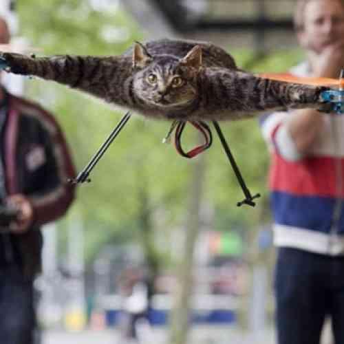 Artista transforma el cadáver de su gato atropellado en un helicóptero