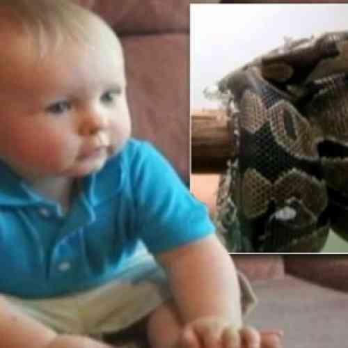 Un padre encuentra a una pitón a punto de devorar a su bebé en la cuna
