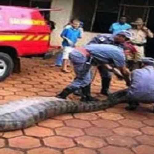 ¿Una víbora se tragó a un diputado brasileño?