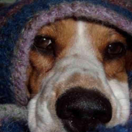 Un perro cuida durante una semana a su compañera muerta