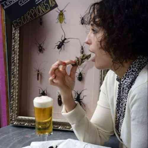 Un bar de Valladolid ofrece insectos aliñados con humus, guacamole o yogur