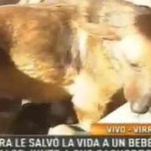 Una perra, 'Puti', salva a un bebé abandonado al darle cobijo junto a sus cachorros