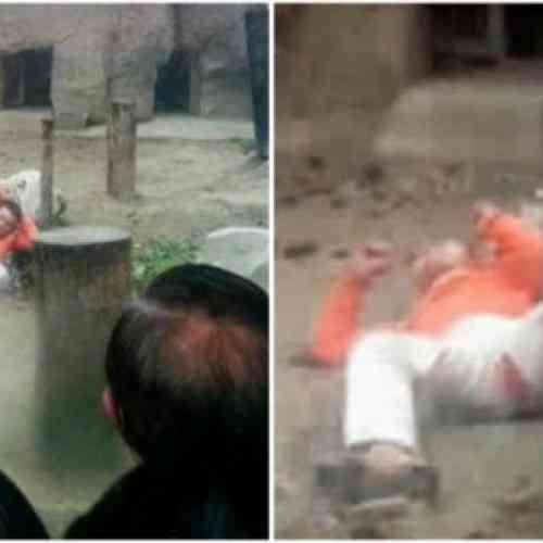 Intenta suicidarse tirándose a una jaula de tigres y éstos le ignoran